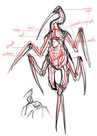 crane anatomy