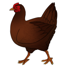 chicken_brown
