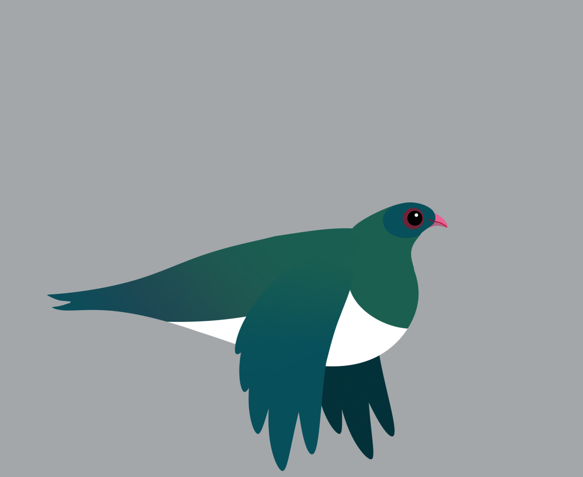 kereru fly down