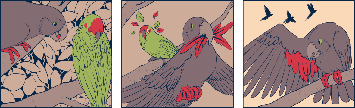 Parrots Low And High_FINAL